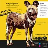 De Afrikaanse wilde hond in Artis